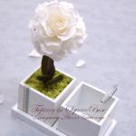 花風水2月 ~ 四角に白いトピアリー